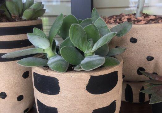 Succulent Saturday